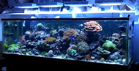 cheap reef tank lighting cheap led fixtures now are dimmable saltwaterfish