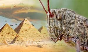 Locust plague in Egypt sparks biblical warning of END OF ...