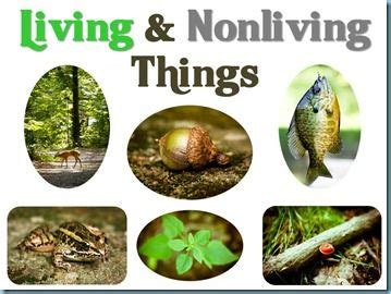 living non living thing powerpoint science science classroom kindergarten science