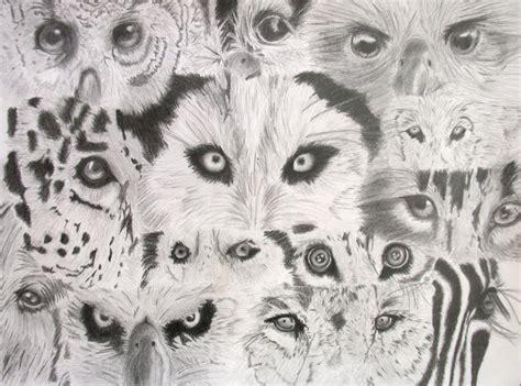 animal eyes  youmepencilpaper  deviantart
