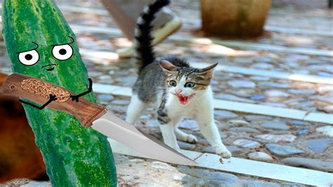 cats cucumbers scared bananas funny vs