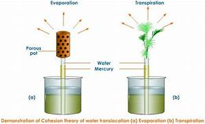 Topic 9.1 Transport in the Xylem of Plants - AMAZING WORLD ...