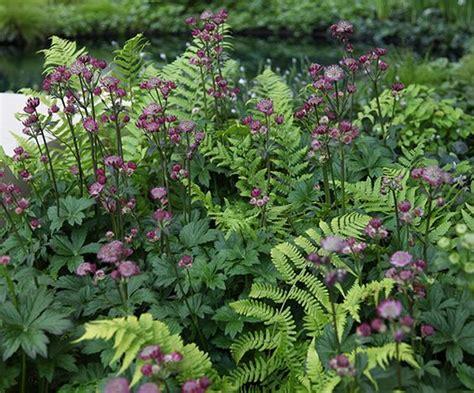 crocus plants for shade pinterest the world s catalog of ideas