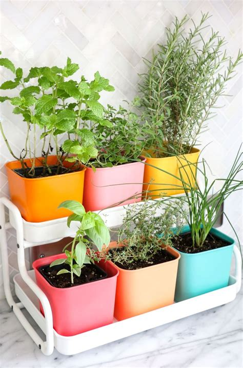 best 25 herb garden indoor ideas on pinterest