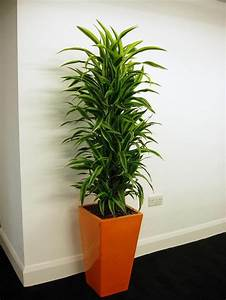 Pflanzen Die Nicht Viel Licht Brauchen : 7 pflegeleichte zimmerpflanzen die wenig licht brauchen ~ Markanthonyermac.com Haus und Dekorationen