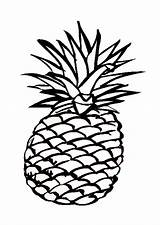 Pineapple Coloring Clipart sketch template
