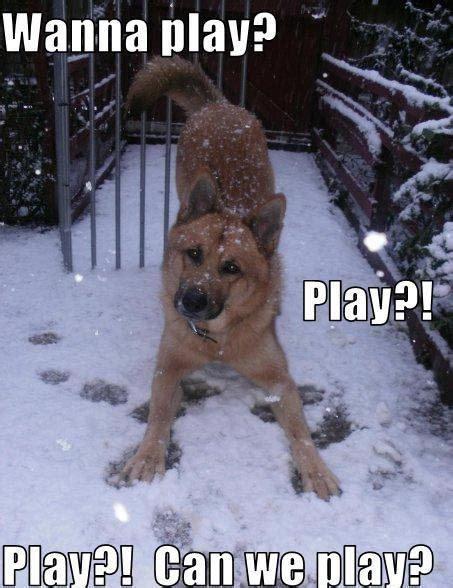wanna play play play   play dogs photo