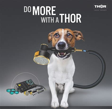Boat Names For Veterinarians by Veterinary Thor Photobiomodulation Therapy Lllt Products