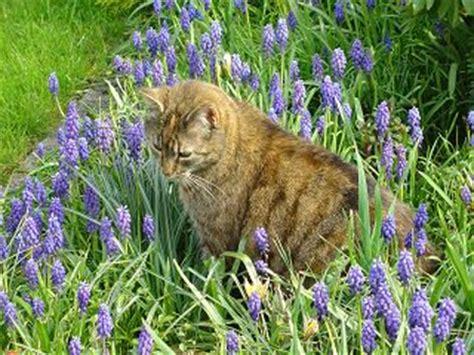 Nachbars Katze Erleichtert Sich In Unseren Blumenbeeten