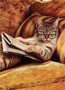 smart cat smart cat daily picks and flicks