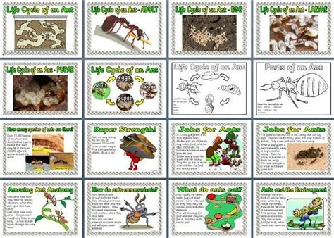 ks1 and ks2 science resource minibeasts ant lifecycle