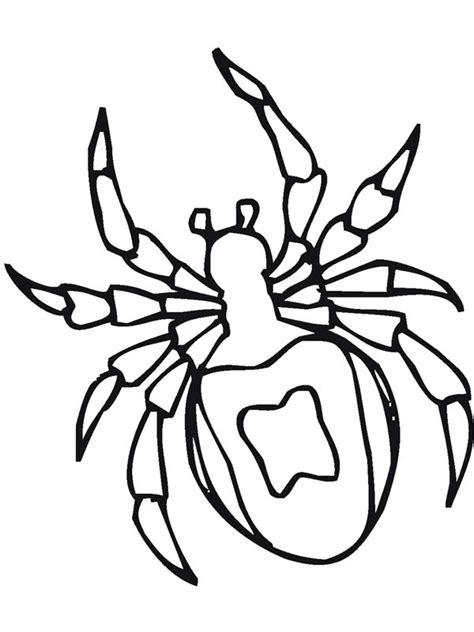 tarantula spider drawing coloring page netart