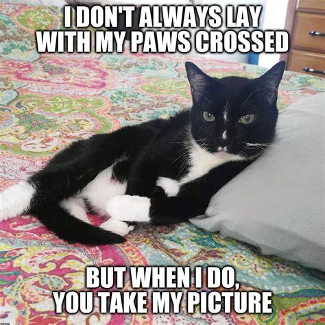 Tuxedo Meme - tuxedo cat imgflip