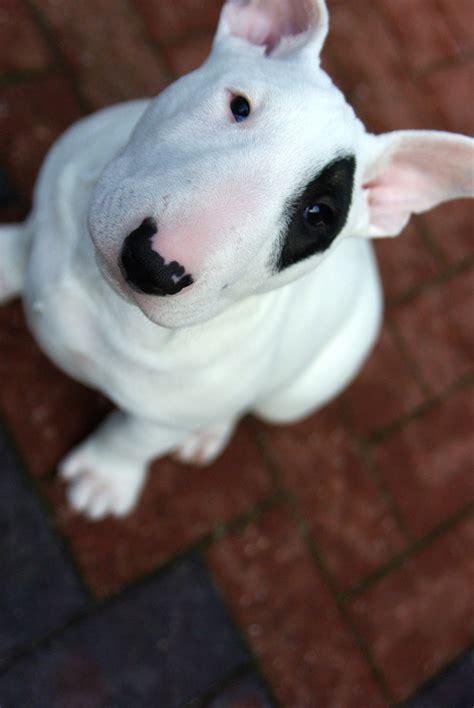 top   dog breeds   home  children top inspired