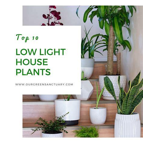 top 10 low light houseplants our green sanctuary
