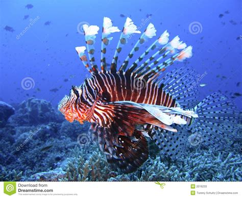 brightly colored fish brightly colored fish in blue water stock image