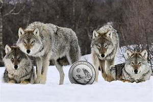 APMEX gets the exclusive on Canada's second 3/4oz silver ...
