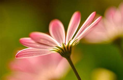 como esta formado el caliz de la flor respuestastips