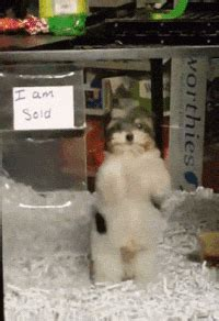 pet puppy gifs find share  giphy