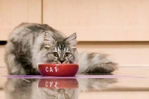 Bestes Trockenfutter Für Katzen : bestes katzen trockenfutter 2019 test vergleich alle infos ~ A.2002-acura-tl-radio.info Haus und Dekorationen