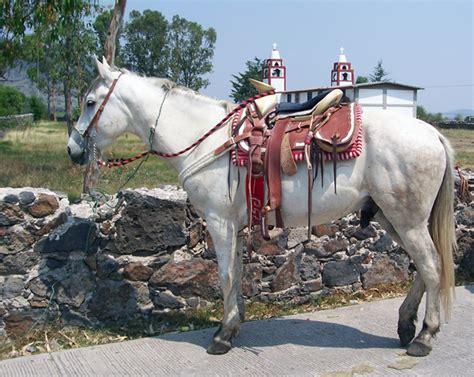 riding rancho cascadas las vacation mexico horse ranch equitrekking