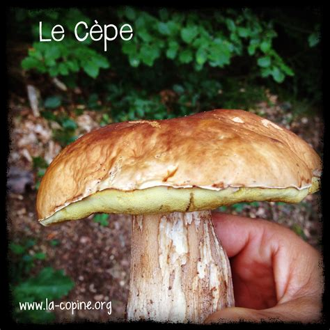 comment cuisiner les cepes comment cuisiner les cepes 28 images comment nettoyer