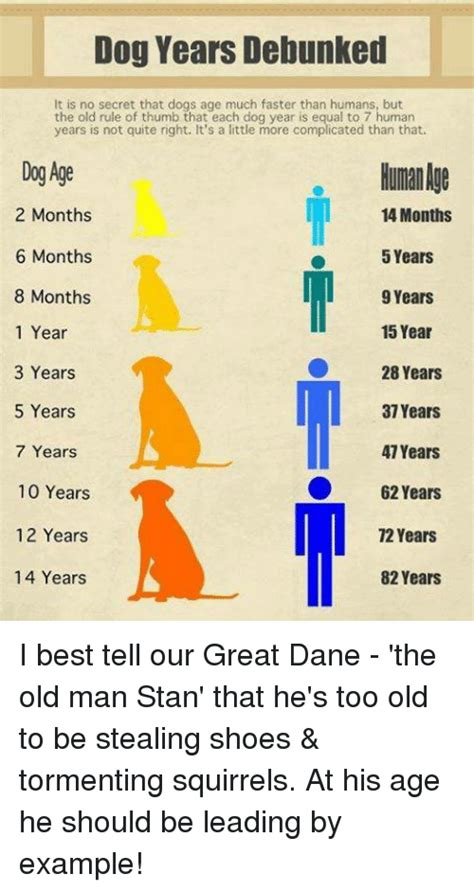 memes  dog years dog years memes