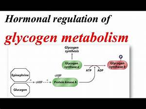 Insulin and glucagon | Chemical Processes | MCAT | Khan ...