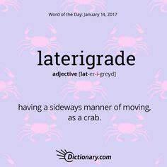 Latérigrade : définition de LATÉRIGRADE , adj. et subst. masc. plur.