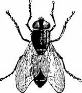 Fly Clipart I2clipart sketch template