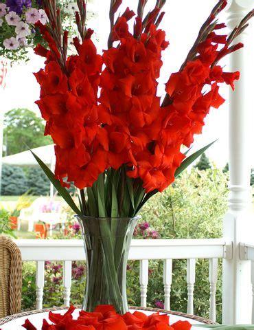 gladiolus    simple bouquet