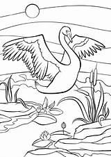 Swan Coloring Birds Wings Farbtonseiten Netter Kleurende Leuke Pagina Mignon Coloration Wonderful Animals Sveglio Coloritura Pagine Jaguar Voegel Schoener Schwan sketch template