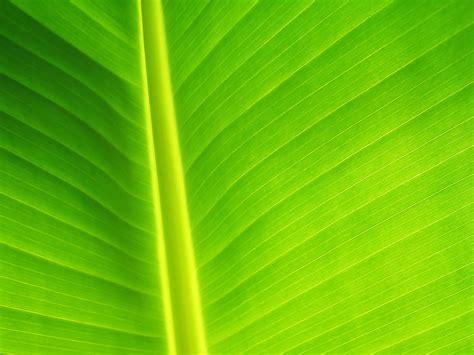 wallpaper hijau