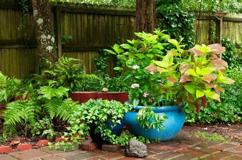 farn im garten farn im garten 187 richtig pflanzen und pflegen