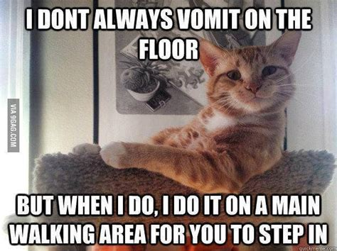 Vomit Meme - yes cats are jerks i have stepped in vomit lately like a boss bitches pinterest
