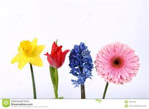 hyacinth flower flowers stock images image 13527204