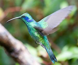 Remarkable macro photograph of a hummingbird by chris for Remarkable macro photograph of a hummingbird by chris morgan