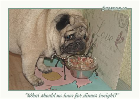 «what Should We Have For Dinner Tonight?» — Gifts For Pug