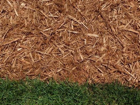 mulch that keeps bugs away termites threats and prevention hgtv