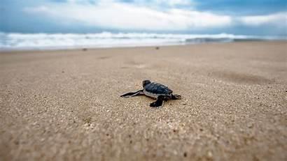 Turtle Sea Chromebook Wallpapers