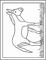 Donkey Coloring Burro Printable Bible Farm Colorwithfuzzy sketch template