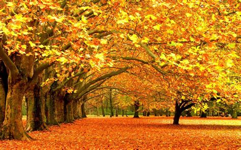 Fall Backgrounds For by Autumn Fall Background Wallpaper Allwallpaper In 13785