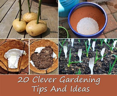 20 clever gardening tips and ideas home and gardening ideas