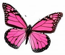 Pink Butterfly Network...