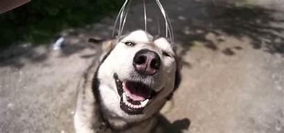 Dog Happy Head Getting Want Massaged