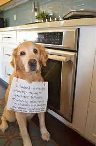 Dog Pooping On Carpet by A Funny Dog Shaming Dump A Day