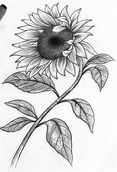 Sunflower Drawing Drawings Pencil Tattoo Sketches Flower