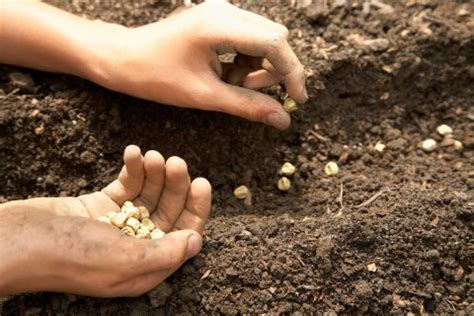 sowing seeds images monsanto case over seed patent reaches supreme court time com