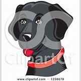 German Shepherd Face Profile | 450 x 470 jpeg 28kB