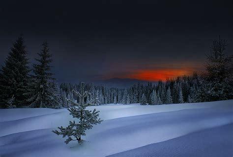 foto de Forêt d'hiver tranquille Télécharger gratuitement le fond